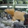 Rùa đầu Rồng K012