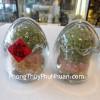 Trứng Ngũ Hành K029