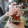 Cây đá thạch anh hồng mini KC060