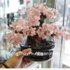 Cây tài lộc gốc đẹp thạch anh hồng (hơi nhỏ) KC085