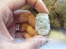 Mặt 12 con giáp Phỉ Thúy xanh nhỏ Tuổi Tuất S6641-11
