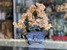 Cây thạch anh vàng thân bonsai chậu kiểu nhật mới (Phước) KC105