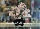 Cây thạch anh trắng thân bonsai chậu kiểu nhật mới (Phước) KC118