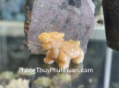 Rùa đầu rồng Hoàng long trơn nhỏ GM030