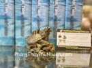 Rùa đầu rồng nhỏ cõng con D307