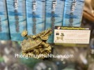 Rùa đầu rồng nhỏ cõng như ý D308