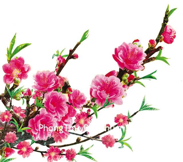 hoa dao 02 Góc khuyết trong phương vị Đào hoa của Sinh Tiêu